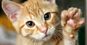 prekės katėms