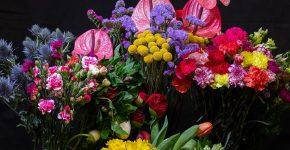 Miegančios rožės